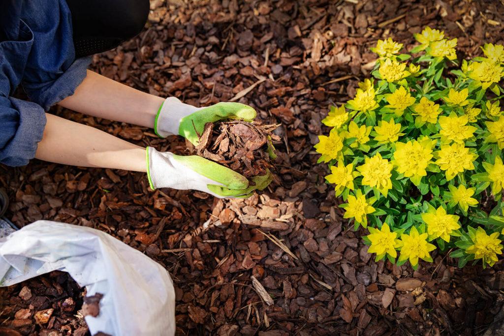 Comment bien désherber son jardin